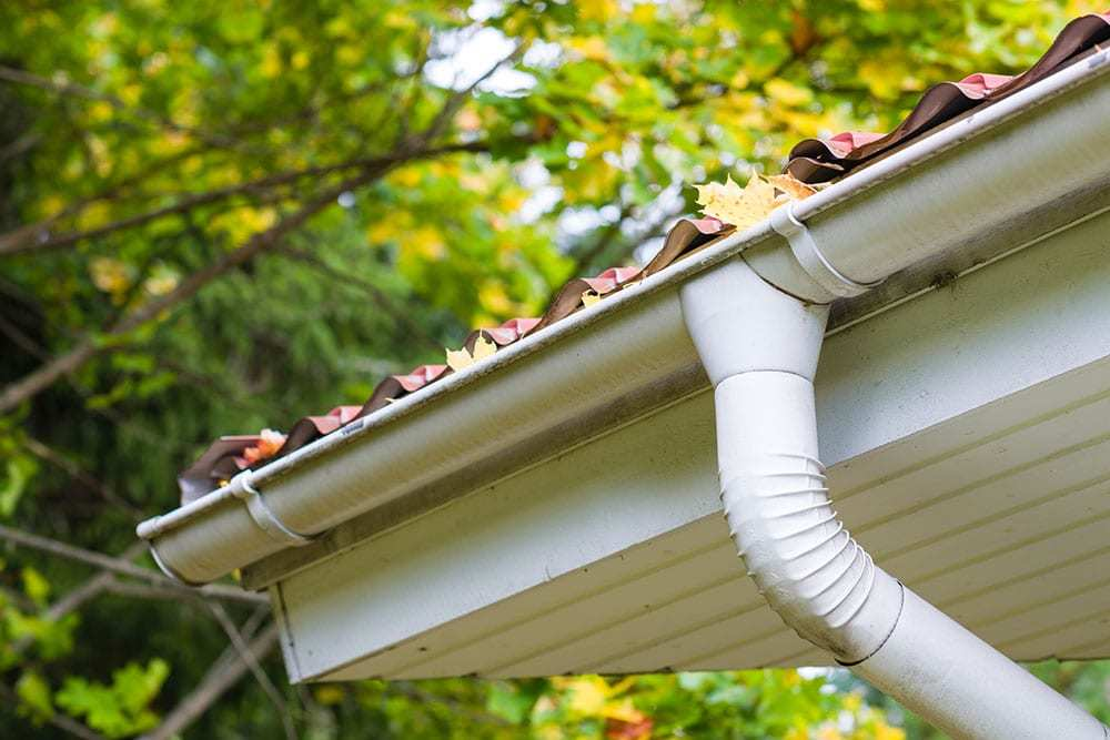 Close-Up-of-Leaves-in-a-Gutter-System
