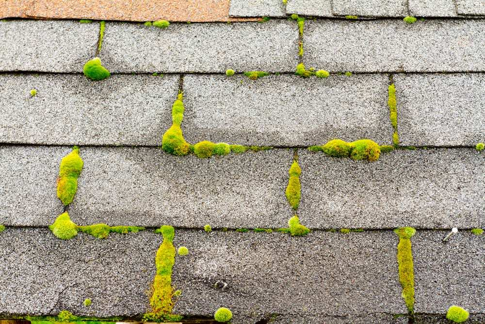 Moss on a Residential Roof