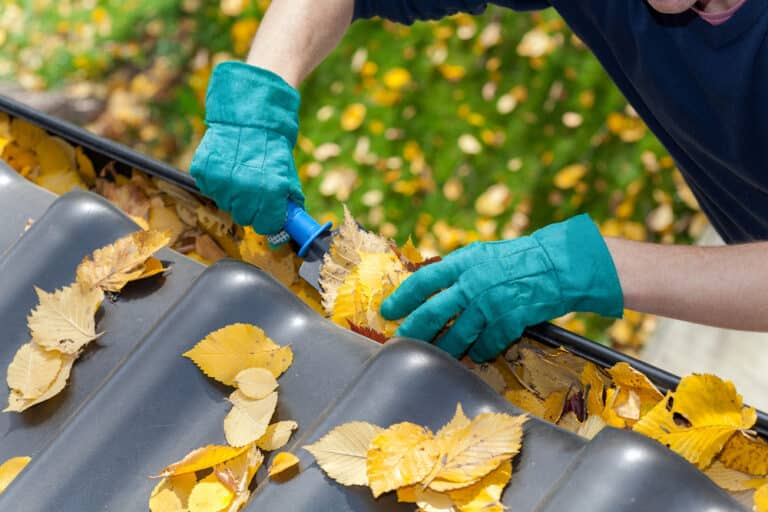 Gloved hands cleaning yellow leaves out of gutters